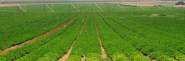 Remote Surveillance for Agriculture